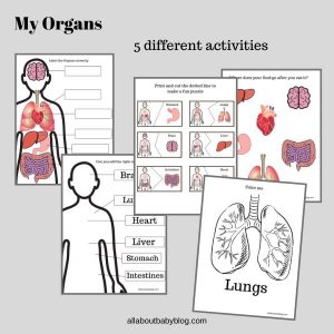 My organs worksheets activities